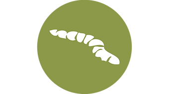 icon-worm.png