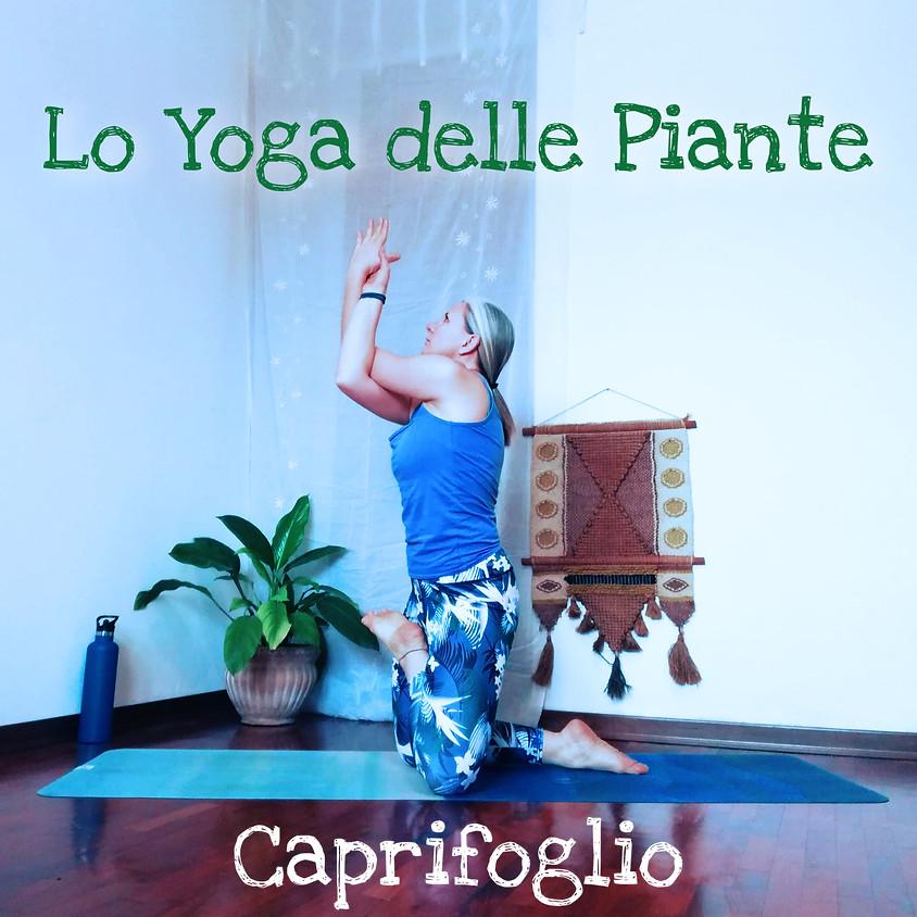 LO YOGA DELLE PIANTE con Tuatara Yoga - Sessione: Caprifoglio