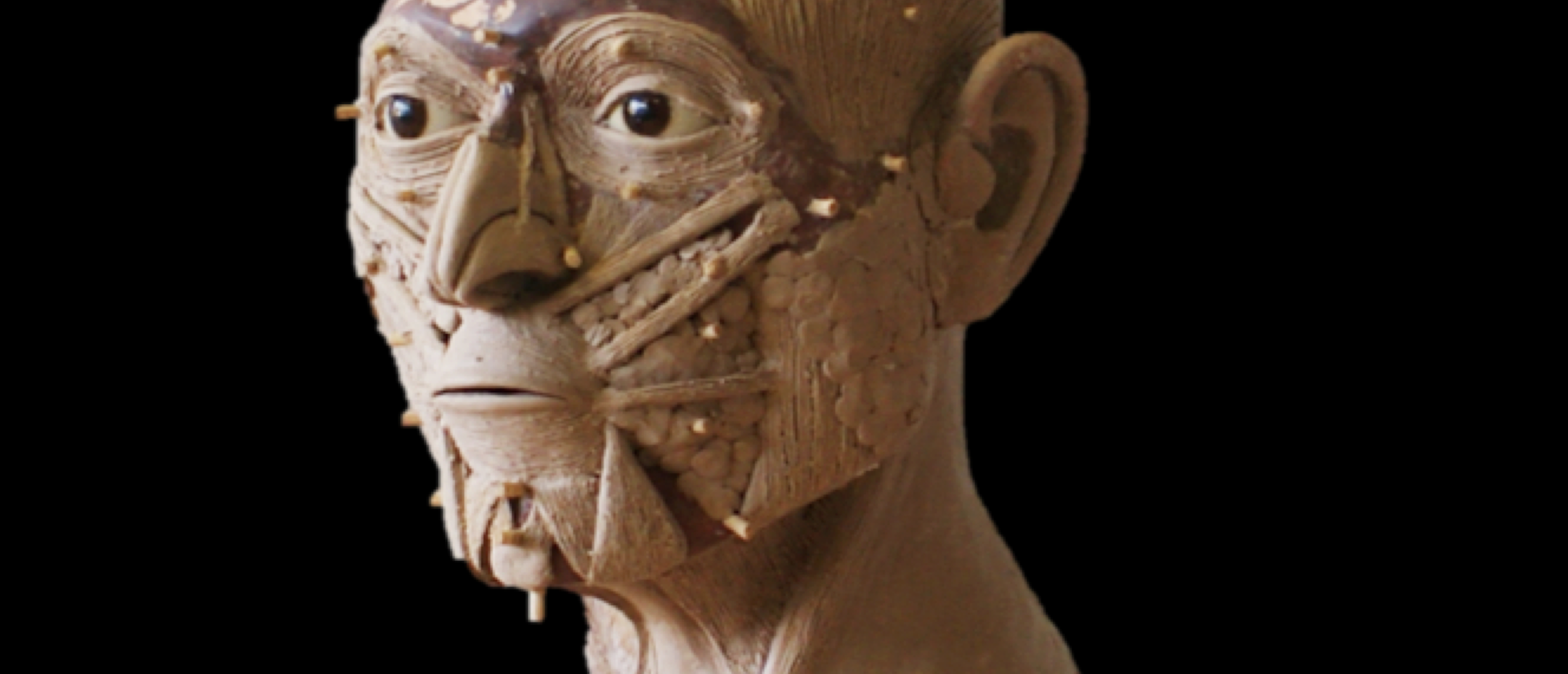 Facial Reconstruction_