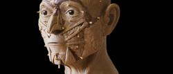 Facial Reconstruction_