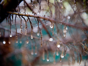 Raindrops on Branch