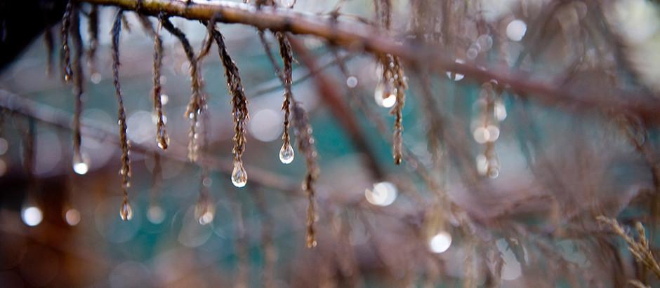 Cae la lluvia y nace un nuevo ciclo