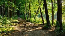 trekking 4