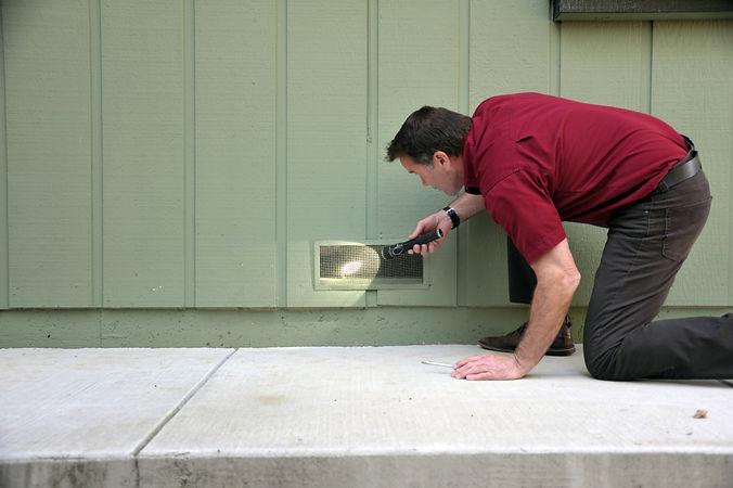 termite-inspection.jpg