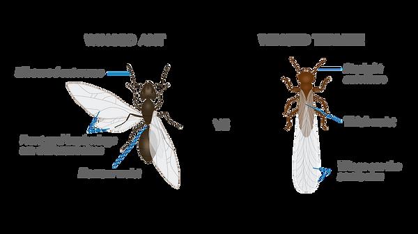 ant-vs-termite.png