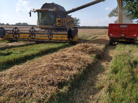 Harvest - done