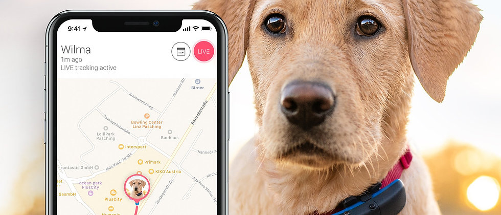 chien collier GPS, tracking gps chien, tracker gps chien, mini gps tracker, GPS animaux, Traceur GPS animaux