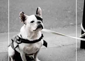 Un tinder pour chiens abandonnés ?