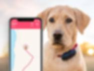 tractive-dog-live-tracking.jpg