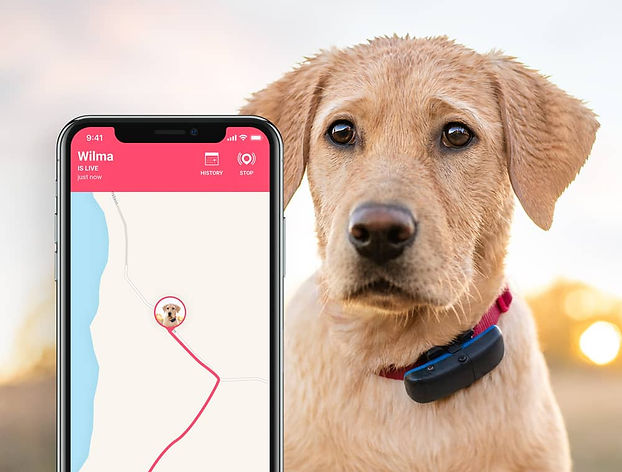 tractive-dog-live-tracking.jpg
