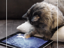 Une app rien que pour les chats ?
