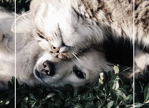5 startups au service de vos animaux de compagnie !