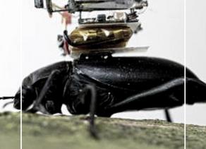 Une toute petite caméra pour explorer le monde des insectes
