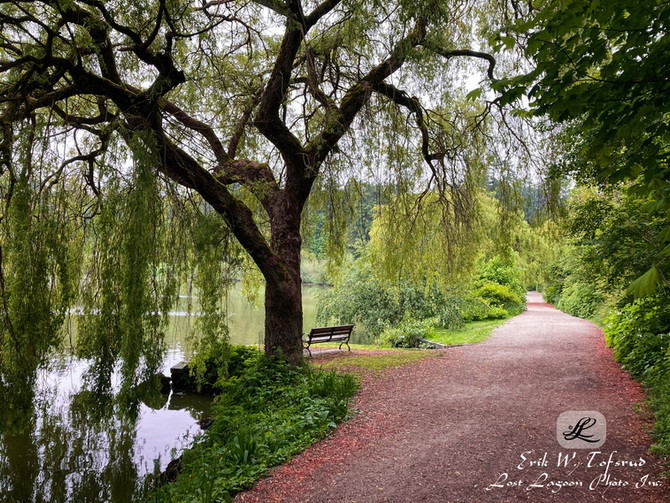 Peaceful view at Lost Lagoon, Vancouver, BC, Canada