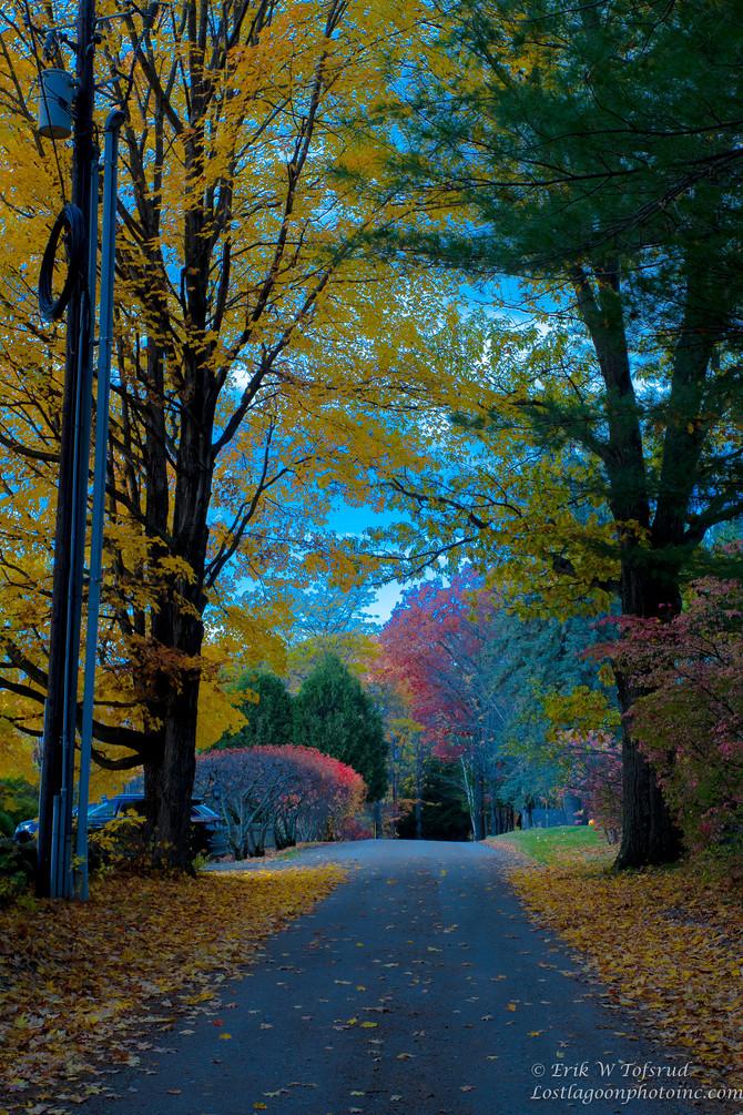 End of the foliage, NH, USA