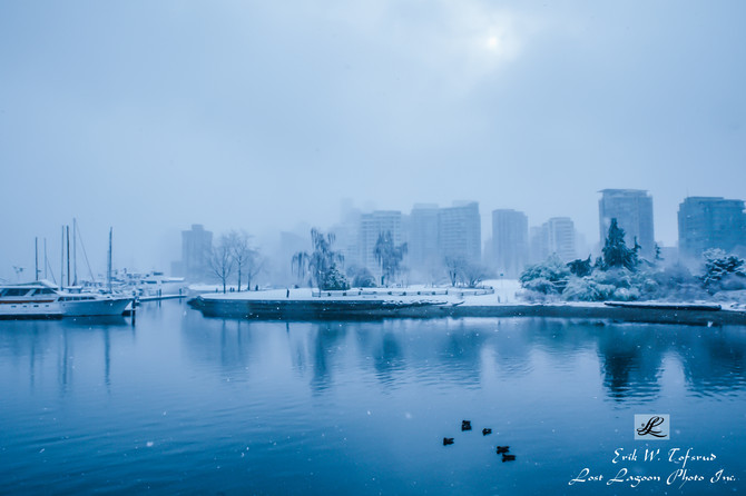 My morning walk views, snow in Devonian Harbour Park, Vancouver, BC, Canada
