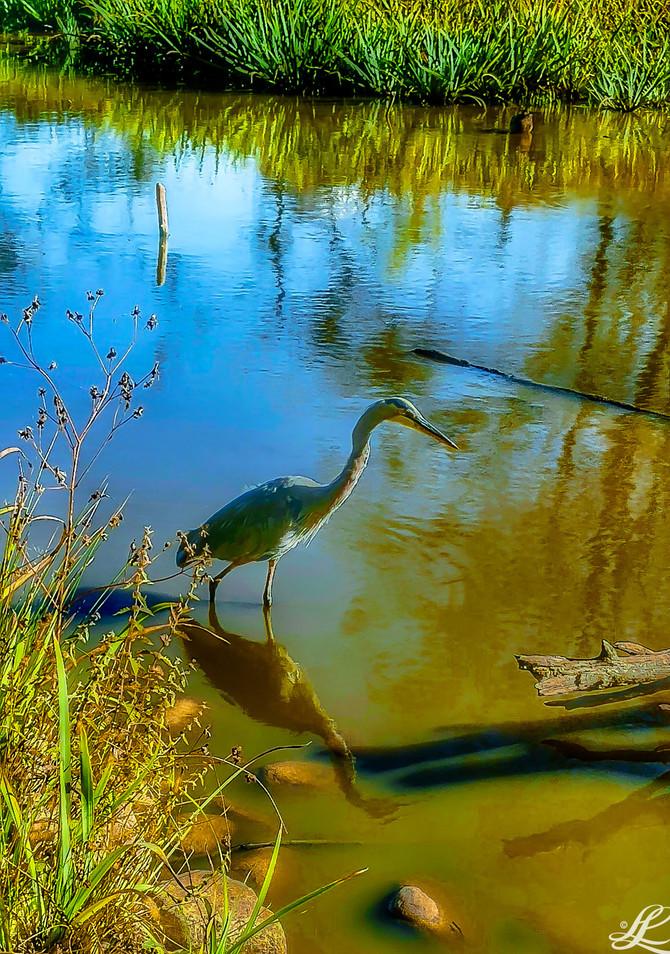 Lost Lagoon, Vancouver, BC, Canada,