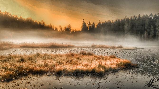 Beaver Lake, fog, Stanley Park, Vancouver, BC, Canada