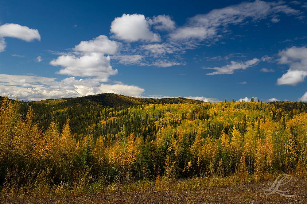 Yellow aspen covered hills along Hwys 1 and 2, Alaska