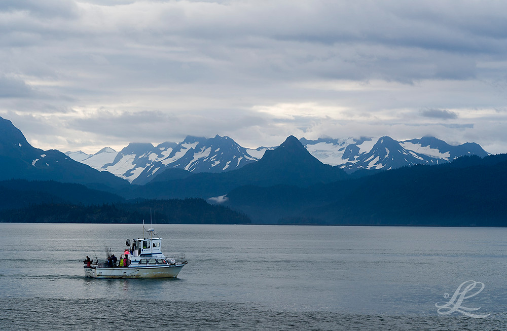 Fishing boat heading out for morning catch of salmon, Homer, AK
