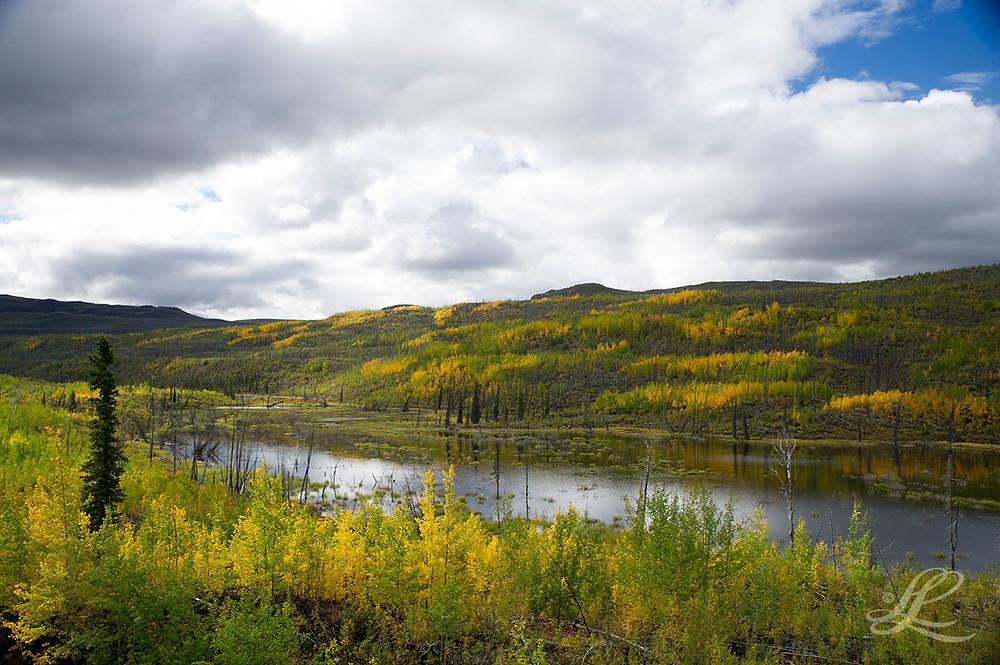 Fall Colours, Klondike Hwy