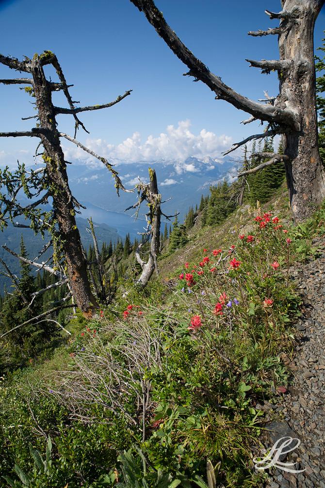 Mt. Idaho Trail