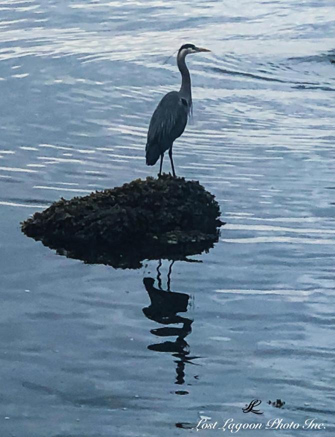 My morning walk view, Seawall, Third Beach, Vancouver, BC, Canada #14