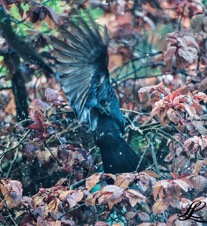 Crows Nest Construction, BC