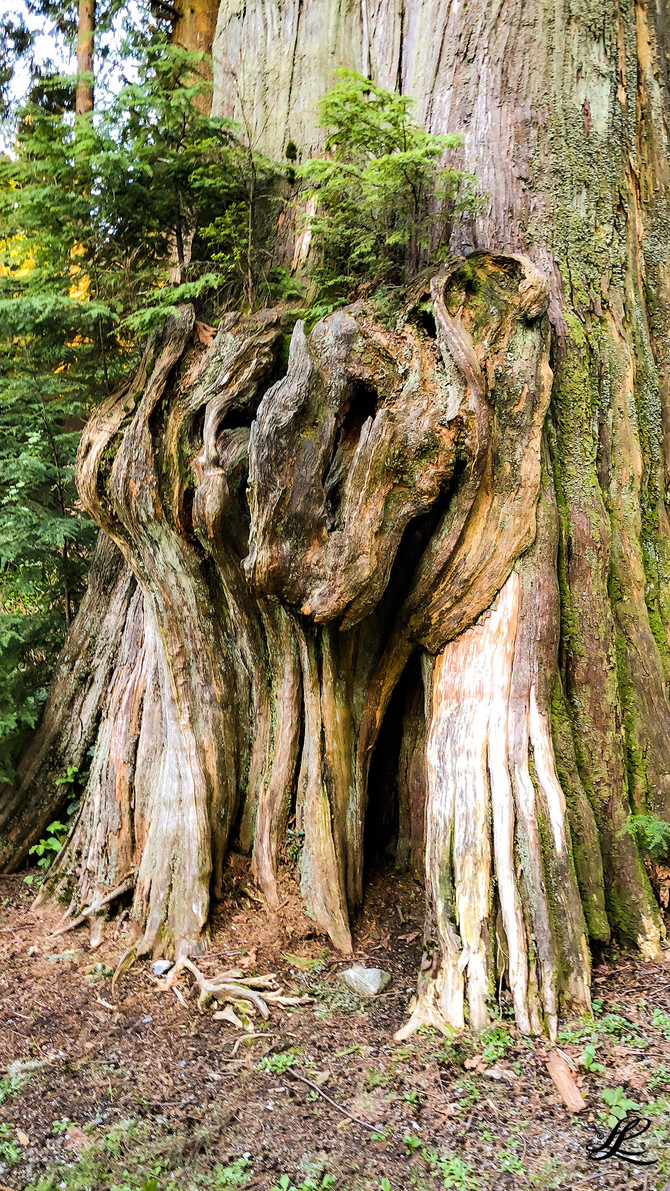 Nature's art, Stanley Park, Vancouver, BC