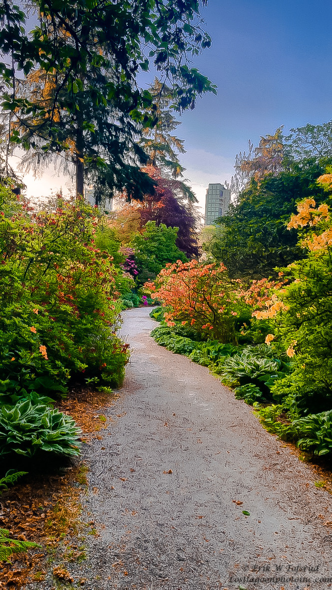 Ted & Marie Rhododendron Garden, Vancouver BC, Canada