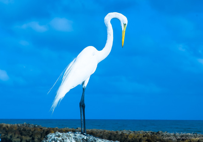 Birds on Bocogrande beach Cartagena, Colombia