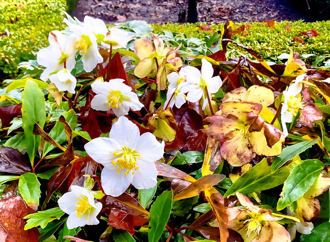 Spring?, Vancouver, BC, Canada