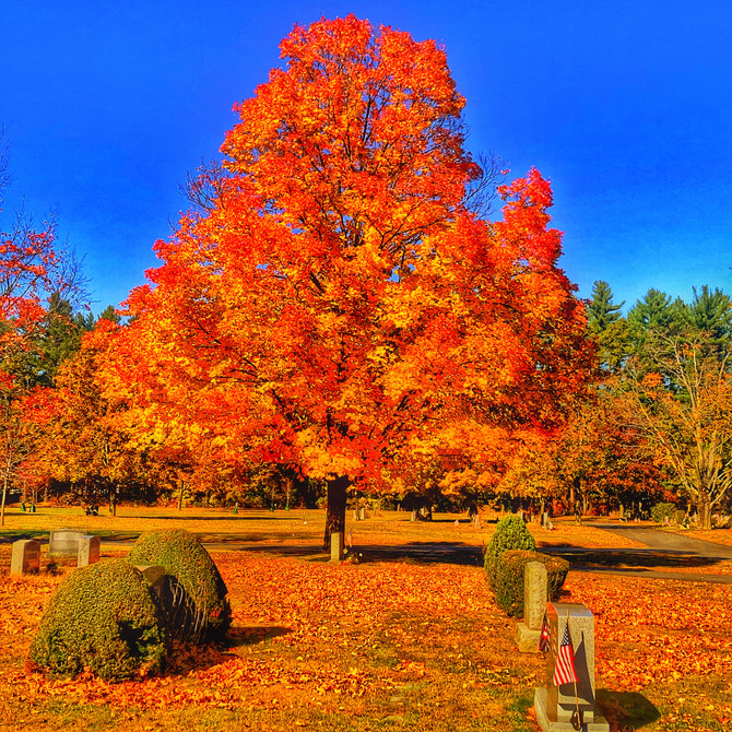Limited foliage in Concord, NH, USA
