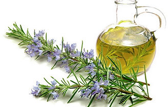 what-is-rosemary-essential-oil-good-for.