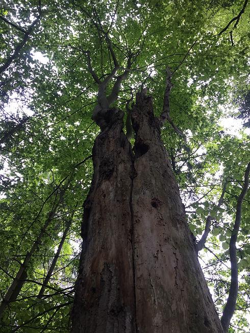 Baum Transformation.jpg