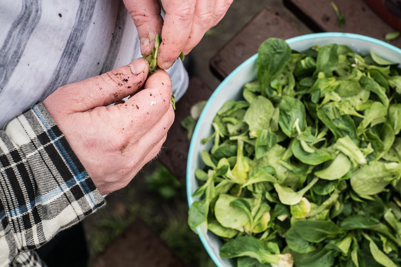 Endless Organic Salads