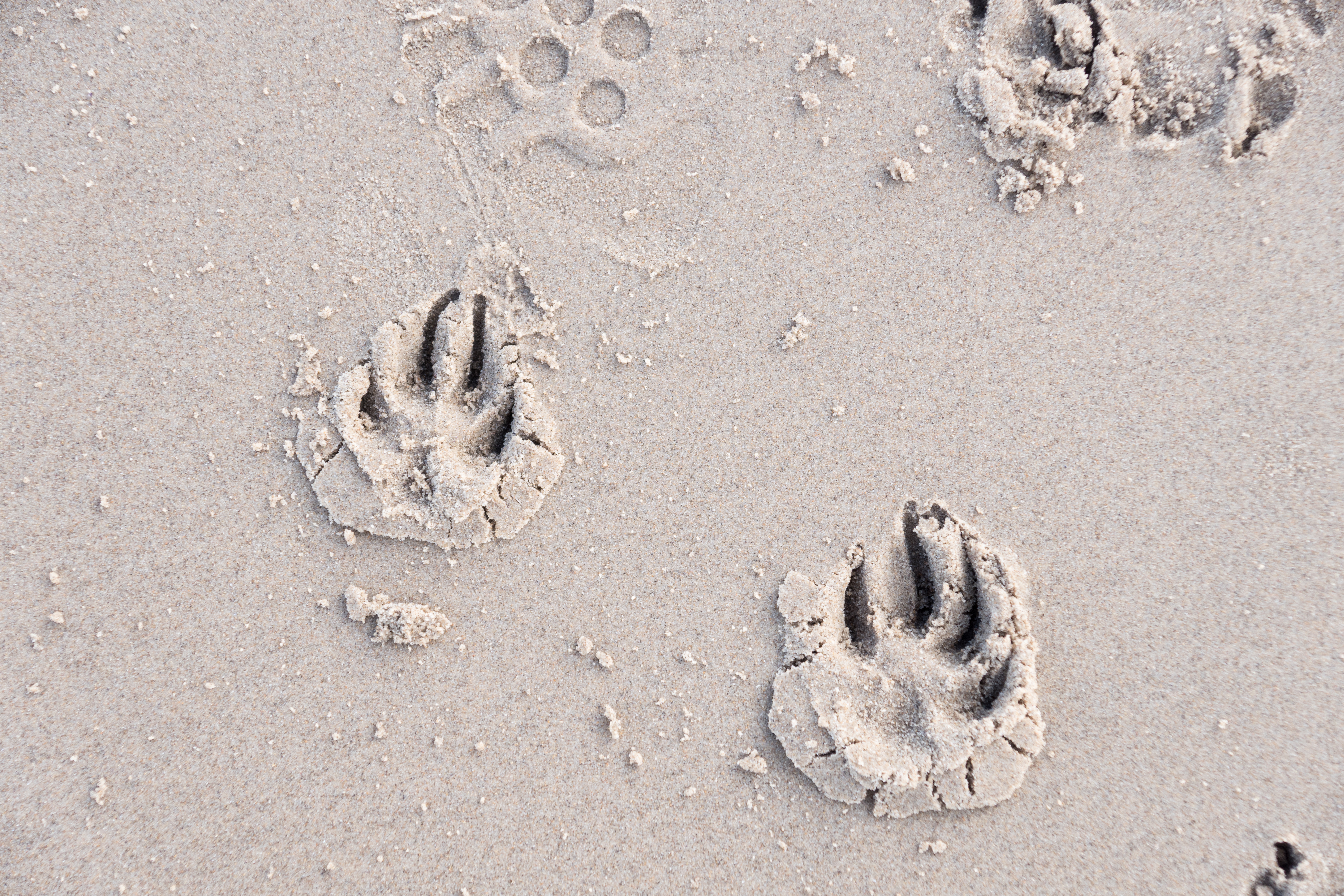 PAW MARKS IN THE SAND