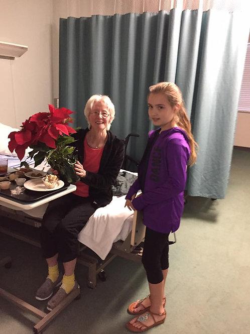 Poinsettia for Nursing Home