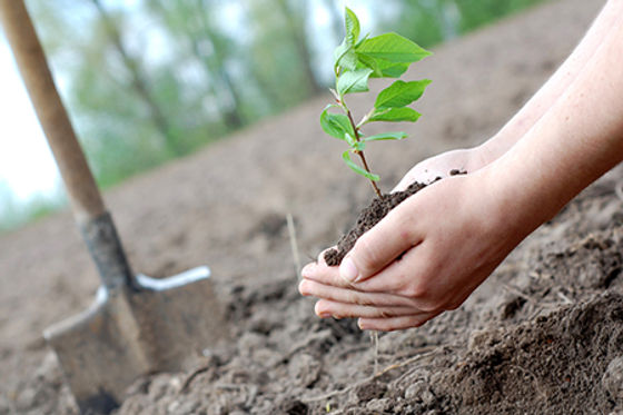 plant-tree-for-earth-day.jpg