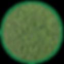 Emerald Zoysia