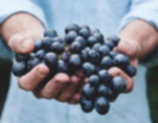 muscadine grape seed health