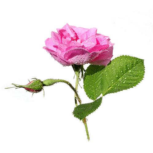 Damas Rose, 1 ml Bio ätherisches Öl