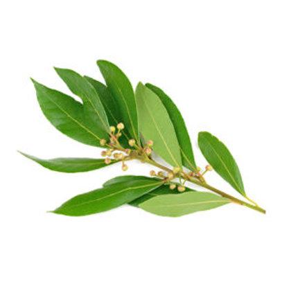 Ravintsara, 10 ml Bio ätherisches Öl