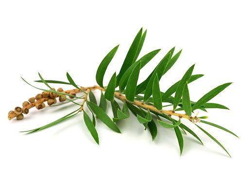 Cajeput, 10 ml Bio ätherisches Öl