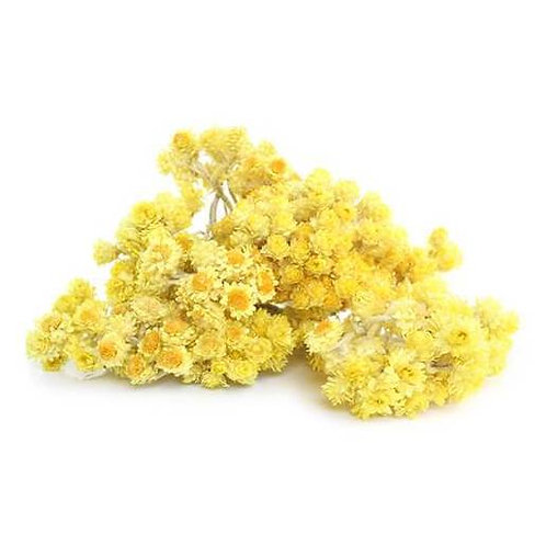 Helichryse Italienne (Immortelle)  3 ml,Bio ätherischesöl