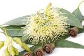 Zitronen Eukaliptus , 10ml Bio ätherisches Öl