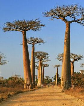 Huile-vegetale-Baobab-bio.jpg