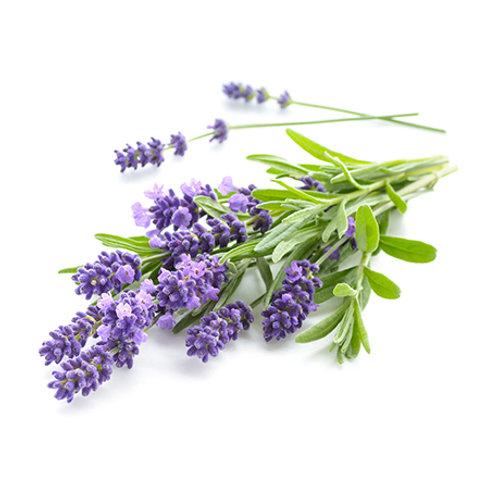 Lavendel aspic, 10 ml Bio ätherisches Öl