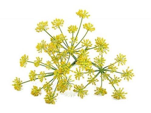 Fenchel, 10 ml Bio ätherisches Öl