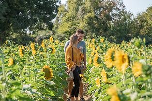 CoupleInSunflowers.jpg